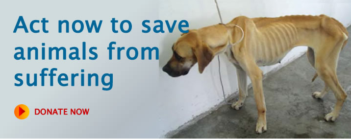 Spca Cape Town Real Deal Online